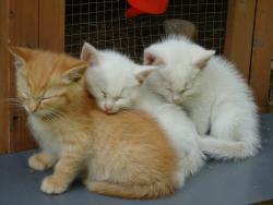 Kuscheltiere Streicheltiere Katzen Kleintiere Streichelzoo