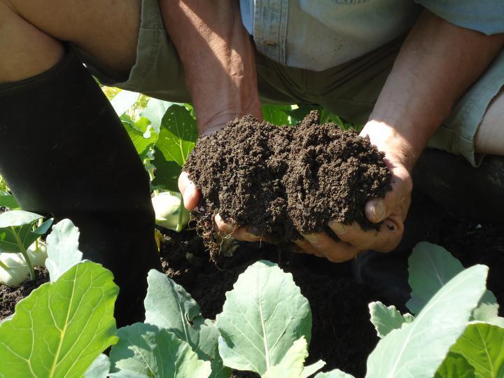 Natur Erde Bodenständig Landwirtschaft Bauernhof Planzen Tiere Ernte