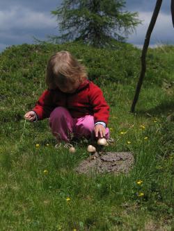 Natur erleben wandern Pilze Schwammerl Kinder Pflanzen Berge Alm