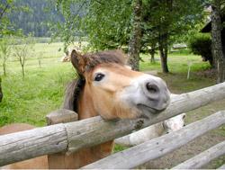 Pferde Ponny reiten Tiere Streichelzoo